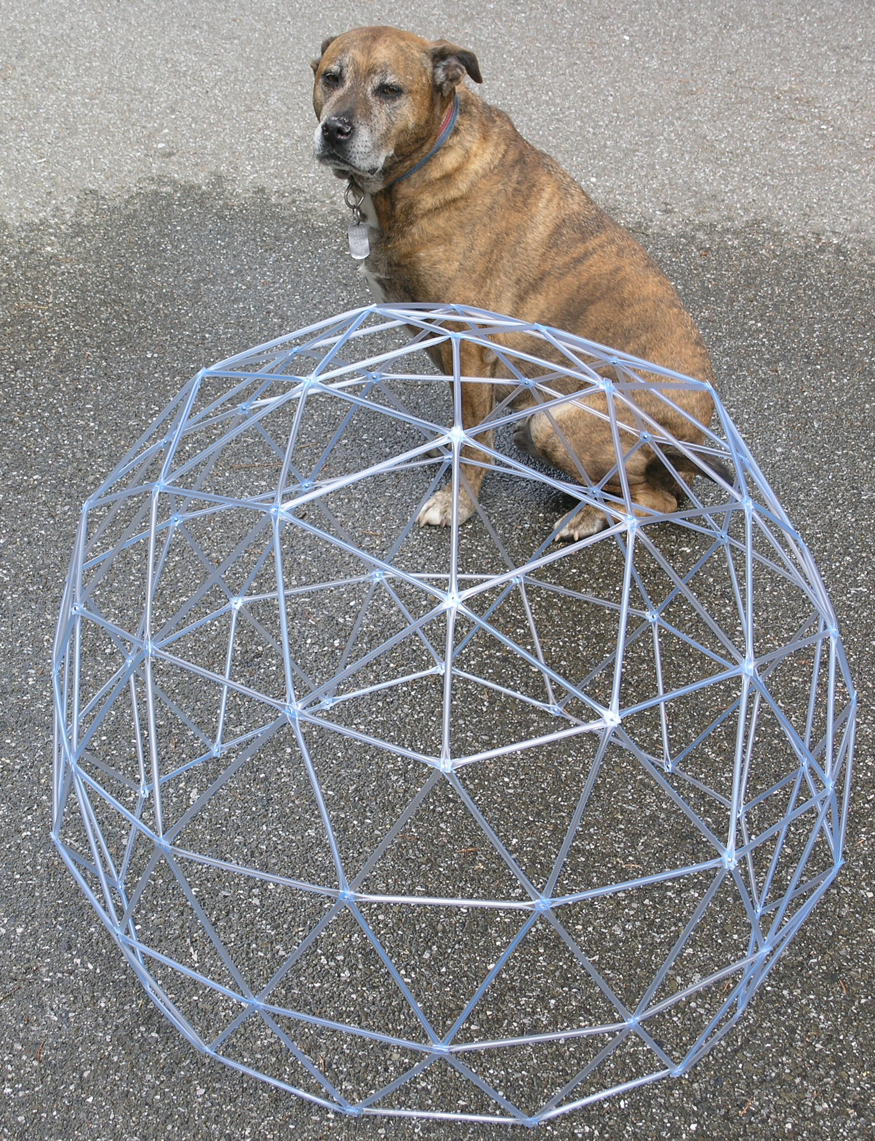 Dog and dome